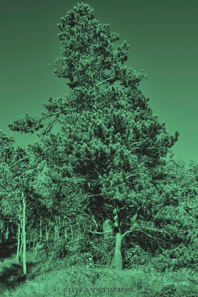 Filter/Green